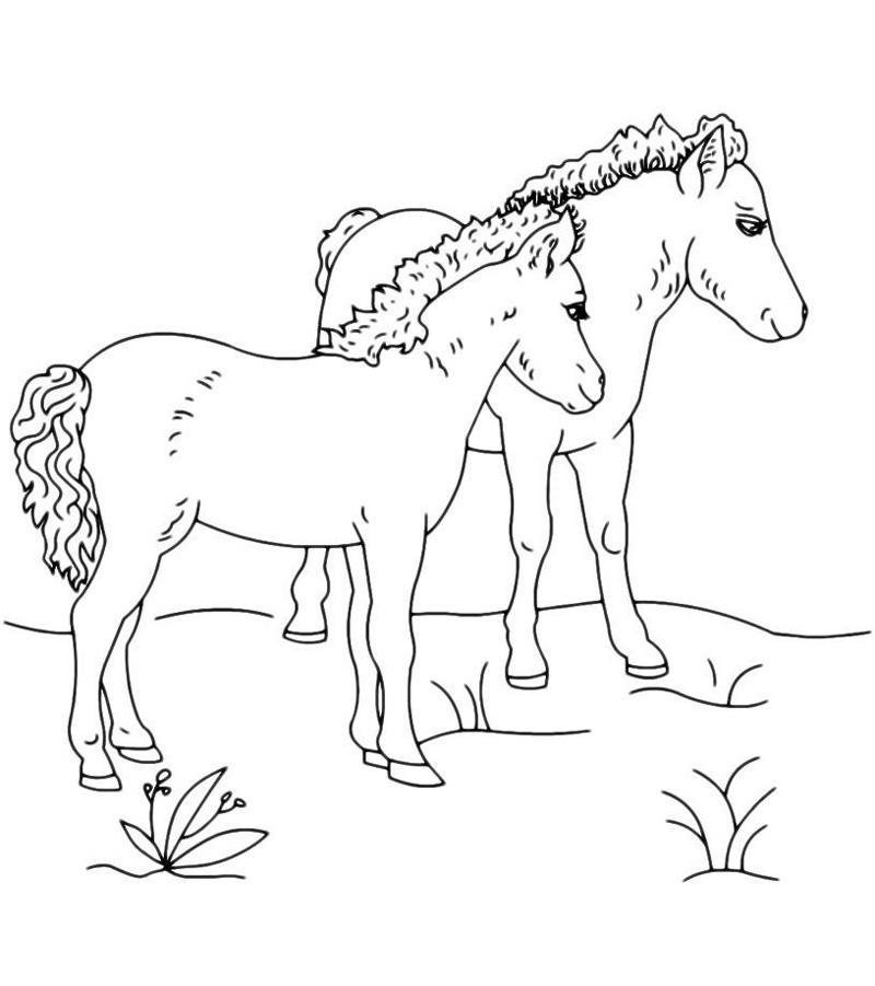 Картинки для раскрашивания лошадь распечатать