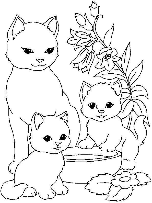 картинки котят раскраски