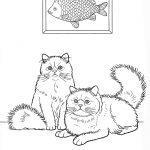 породы кошек раскраски