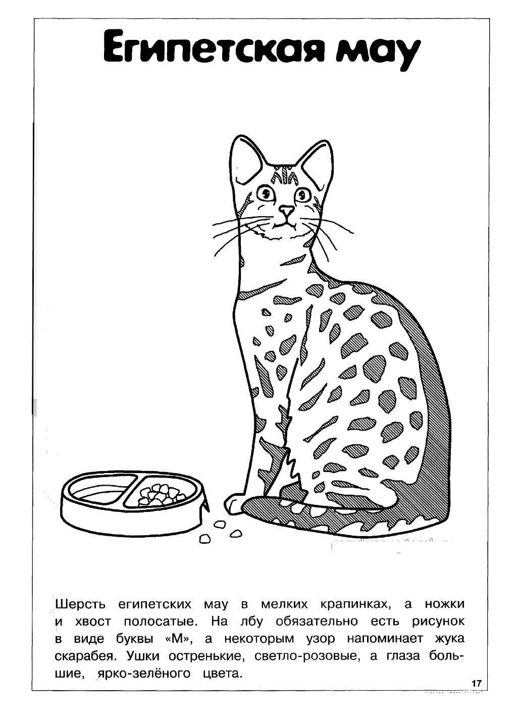 раскраска кошка распечатать а4