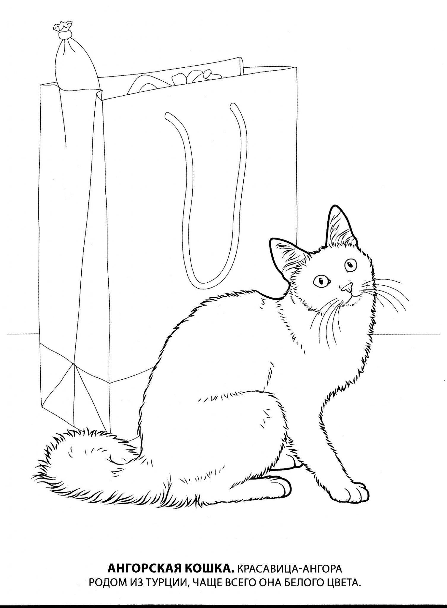 раскраска животных кошка