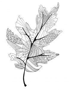 раскраски антистресс лист дубовый