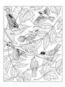 раскраски антистресс много птиц