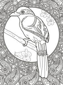 раскраски антистресс птица на ветке