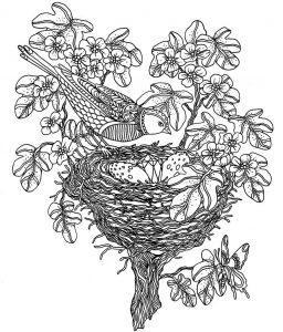 раскраски антистресс птица в гнезде