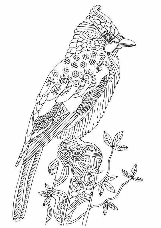 раскраски антистресс птицы дятел