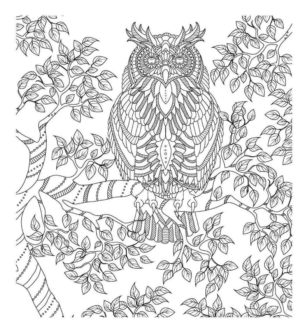 раскраски антистресс птицы филин