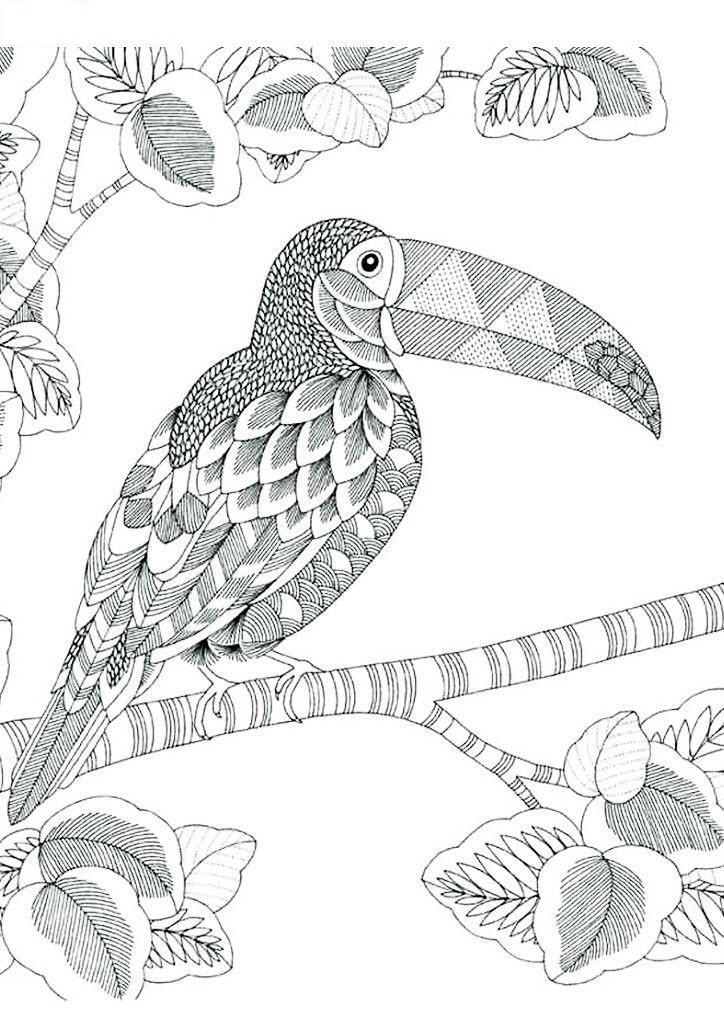 раскраска антистресс птицы пеликан
