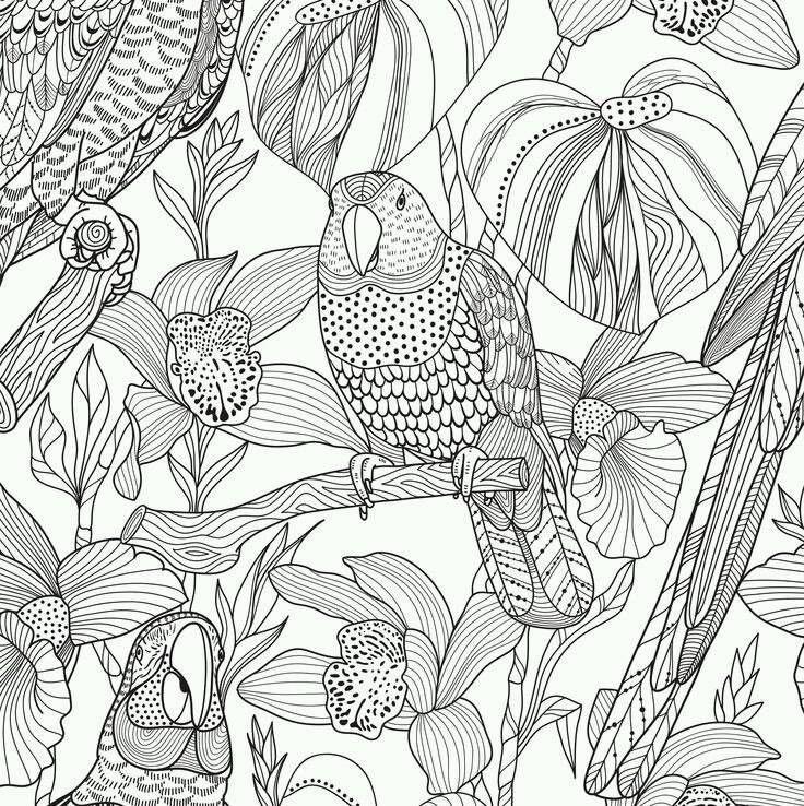 раскраски антистресс птицы попугай