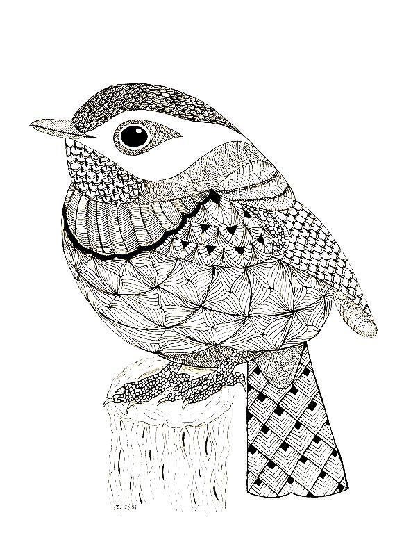раскраска антистресс птицы снегирь