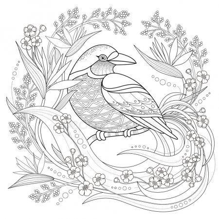 раскраски антистресс птицы сойка