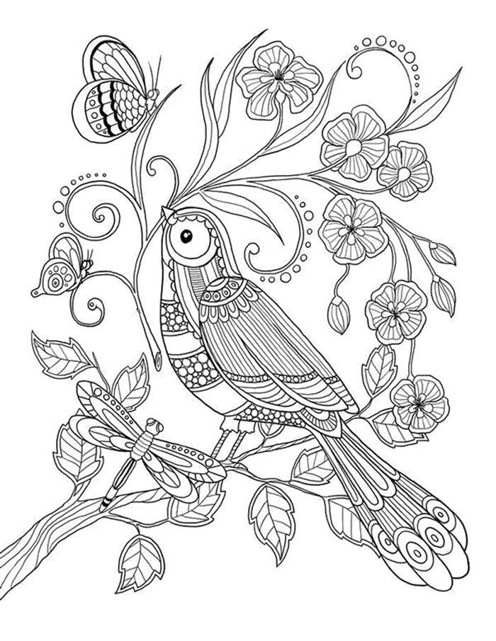 раскраски антистресс птицы сорока