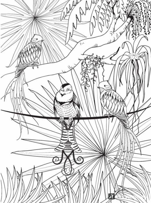 раскраски антистресс райские птицы