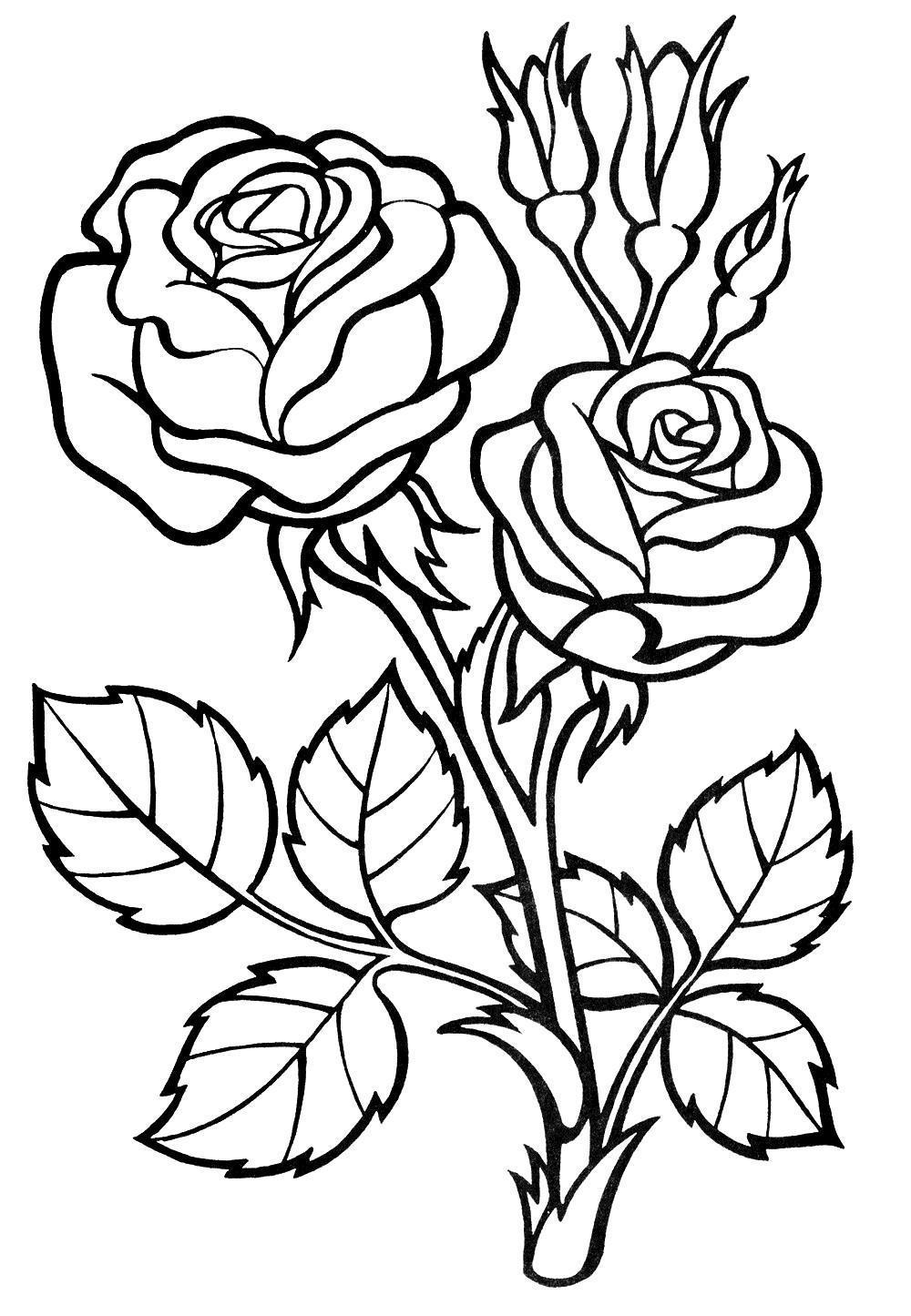 раскраски для девочек 5 лет цветы