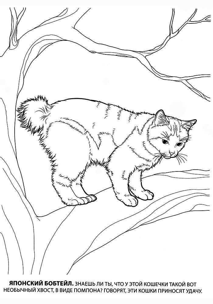 раскраски котов и кошек