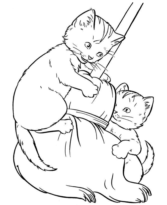 раскраски котята милые и красивые