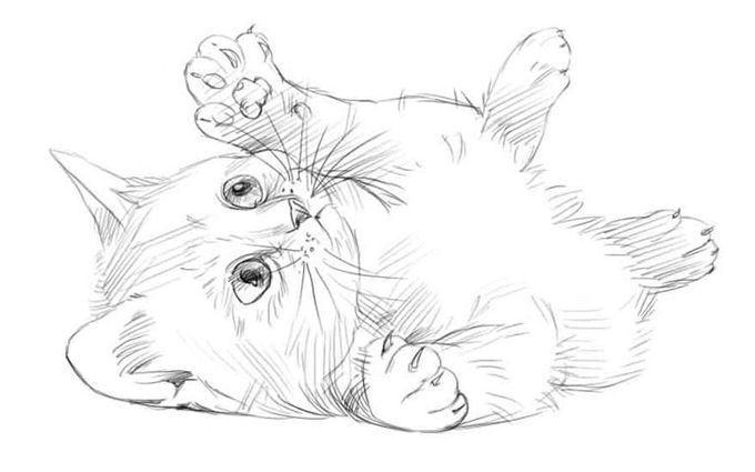 раскраски котята няшные