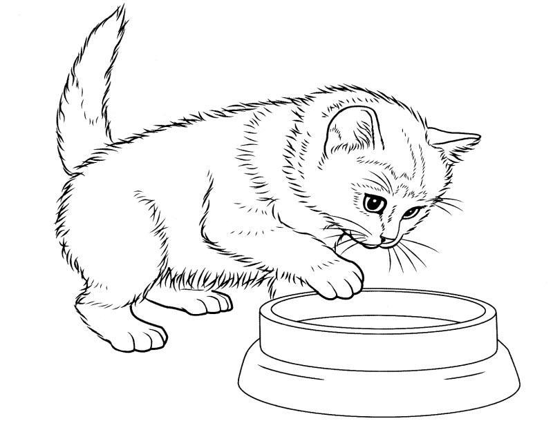 Раскраски котята