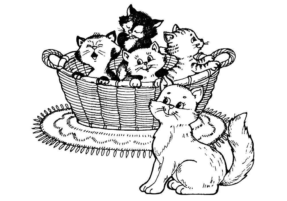 раскраски про кошек и котят
