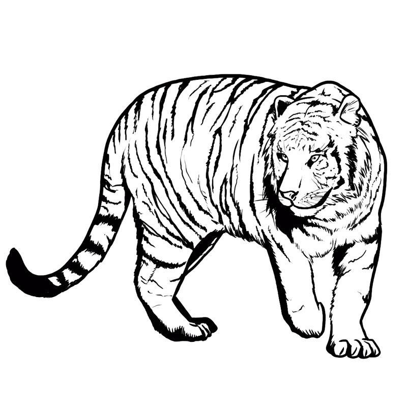 раскраски для девочек 6 7 8 лет животные картинки