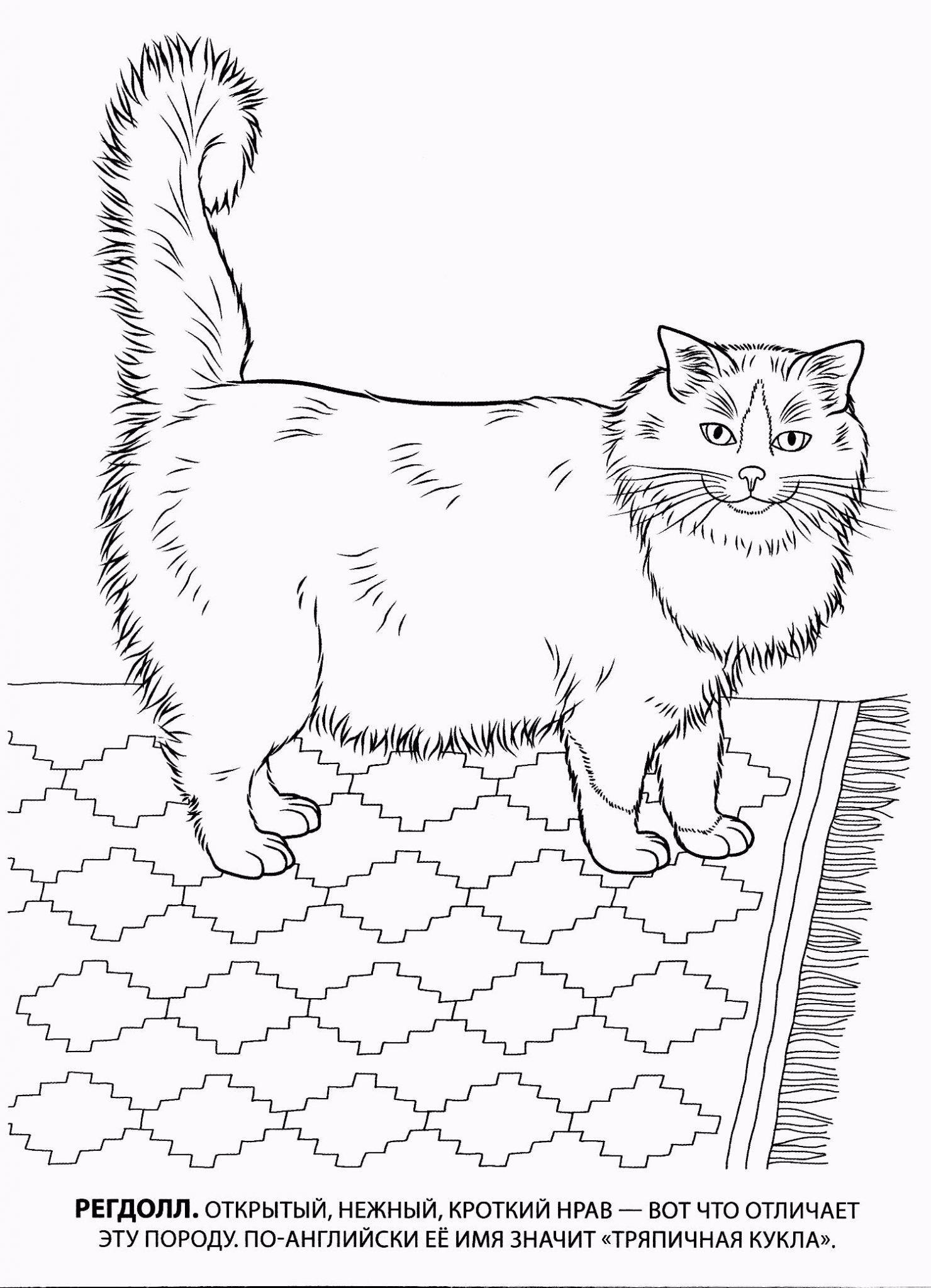 скачать раскраску кошка
