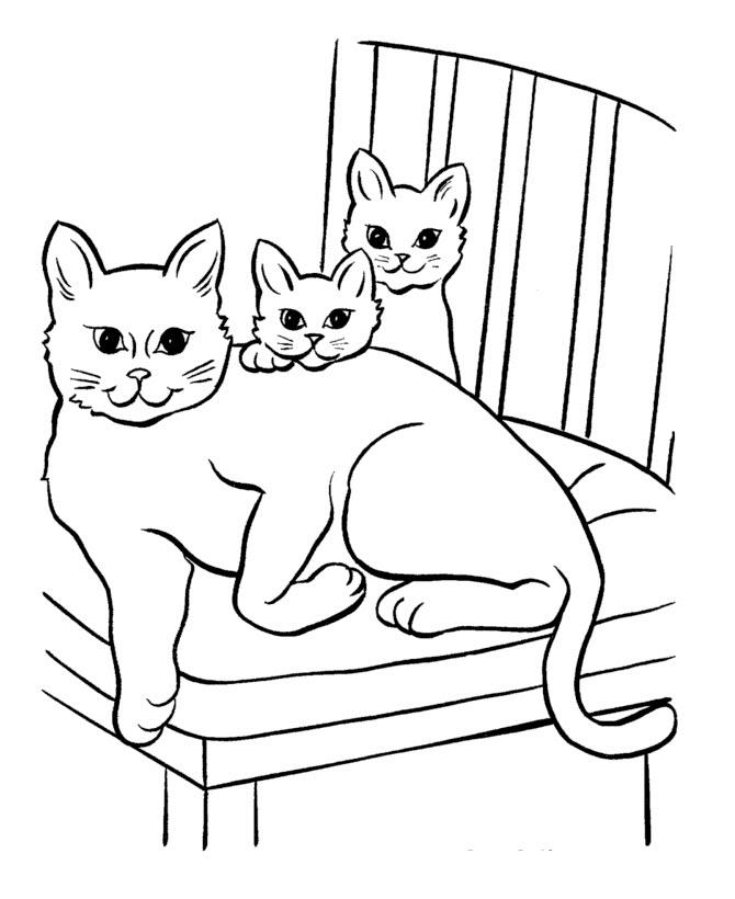 скачать раскраску котенка бесплатно
