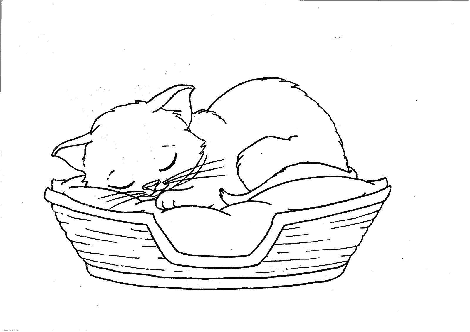 спящий котенок раскраска