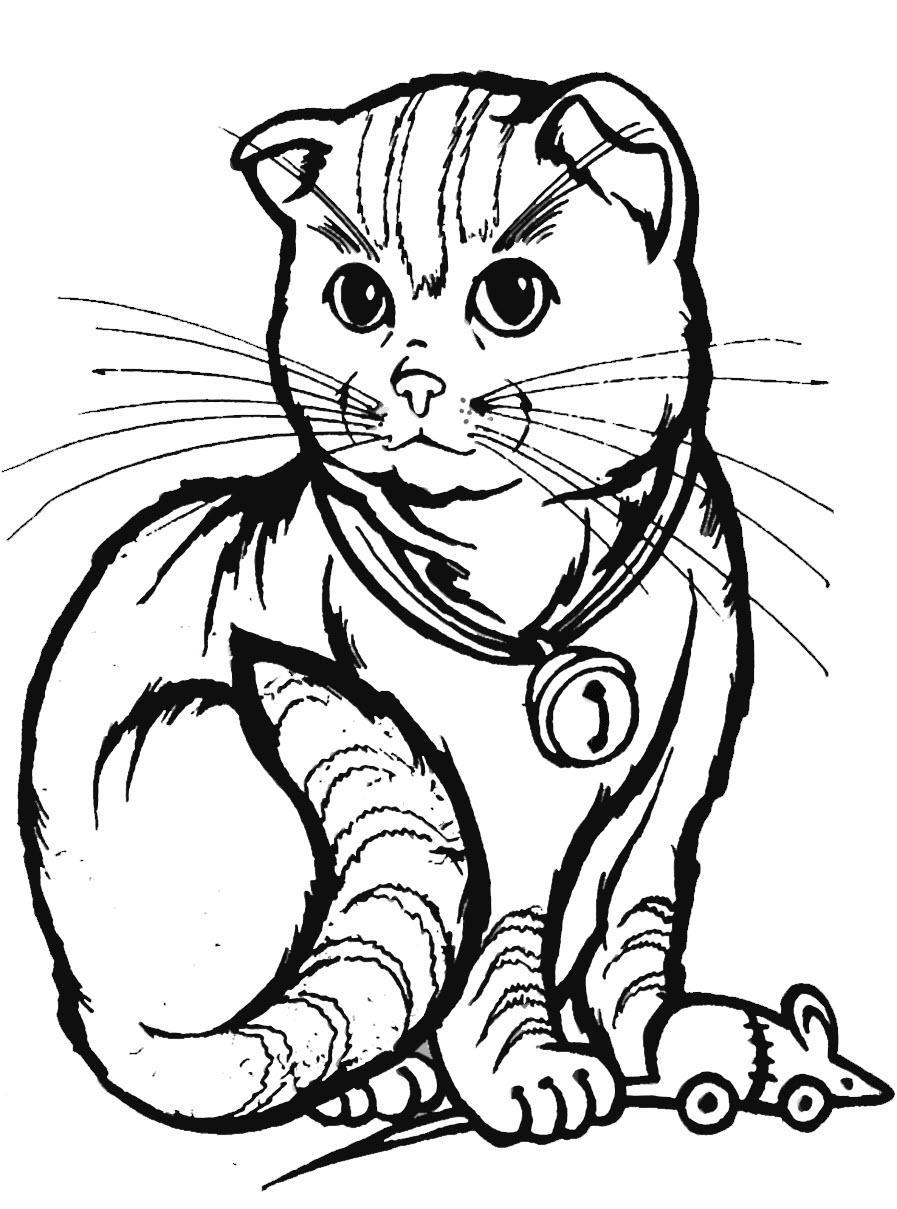 вислоухий котенок раскраска
