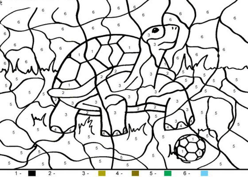 раскраска черепаха по номерам