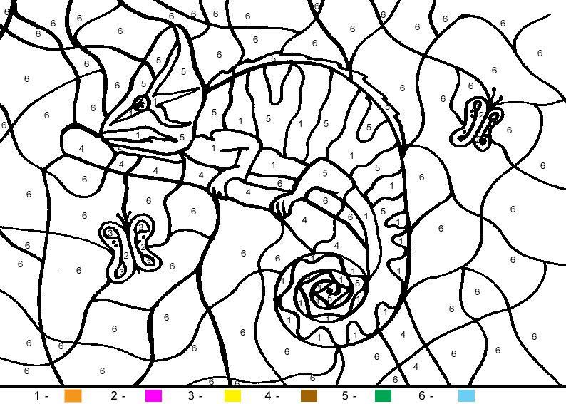 раскраска по номерам хамелеон
