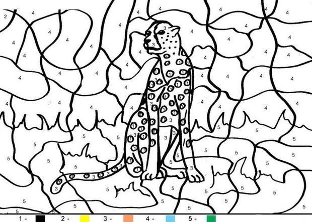 раскраска по номерам тигр