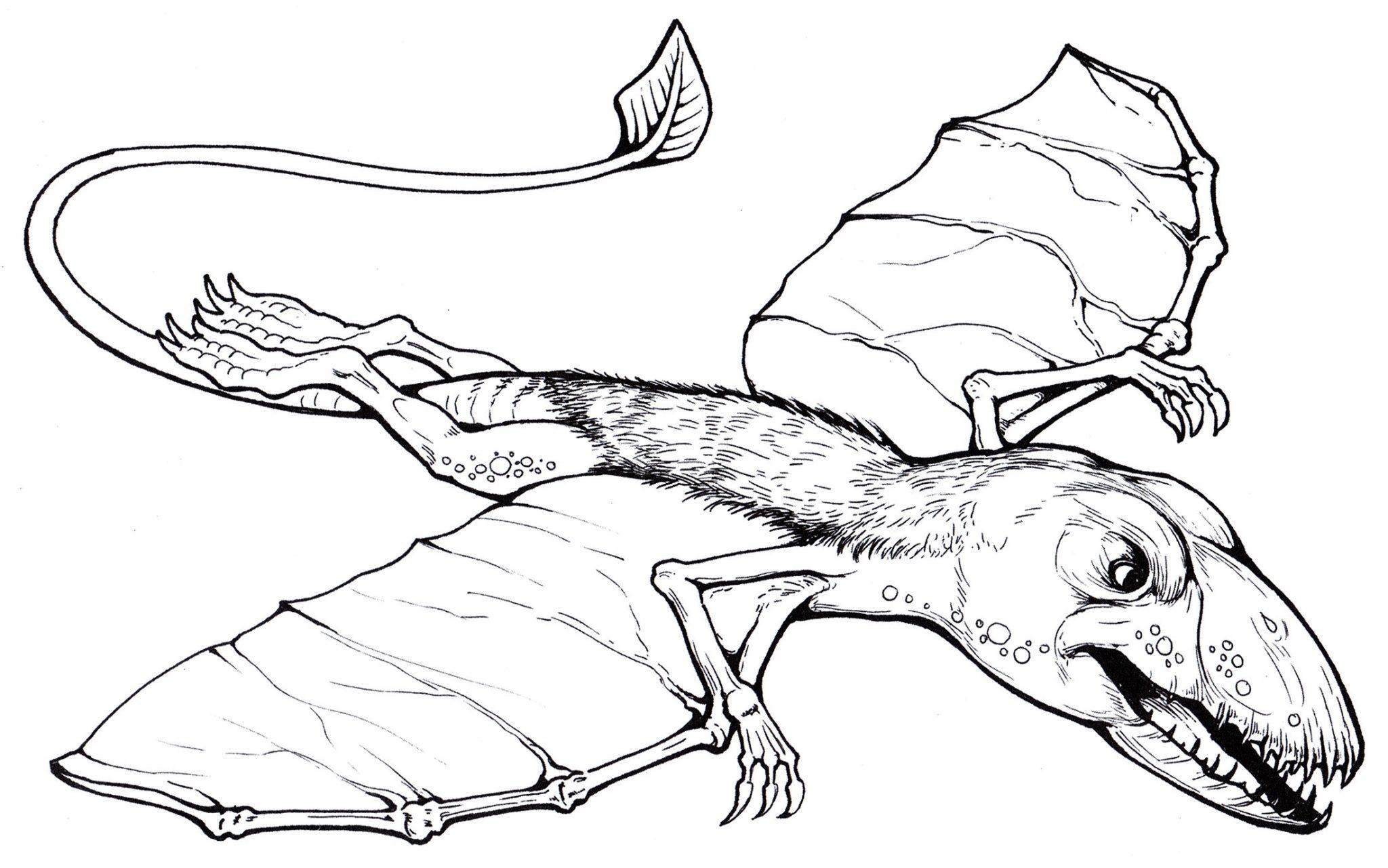 раскраска динозавр диморфодон