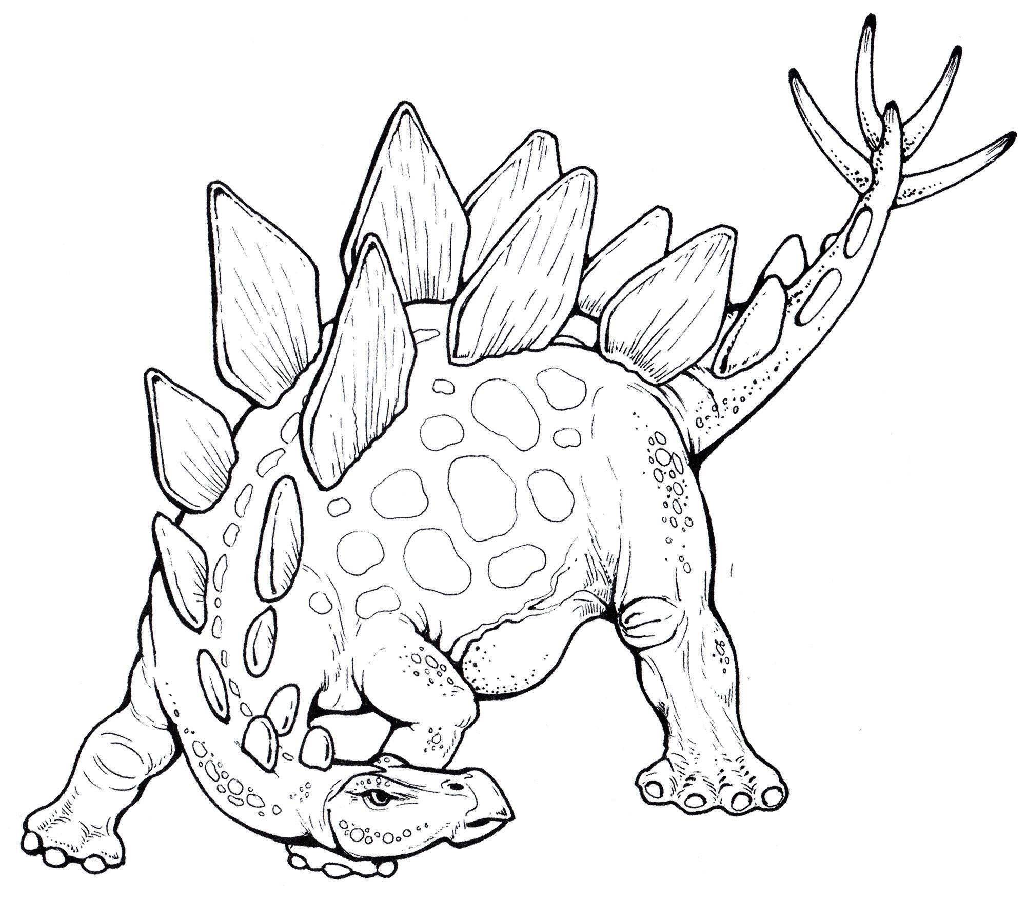 раскраска динозавр стегозавр