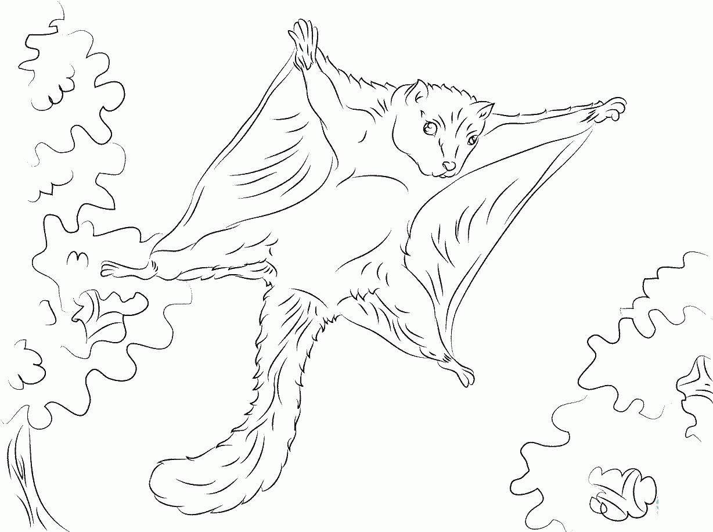белка летяга раскраска распечатать