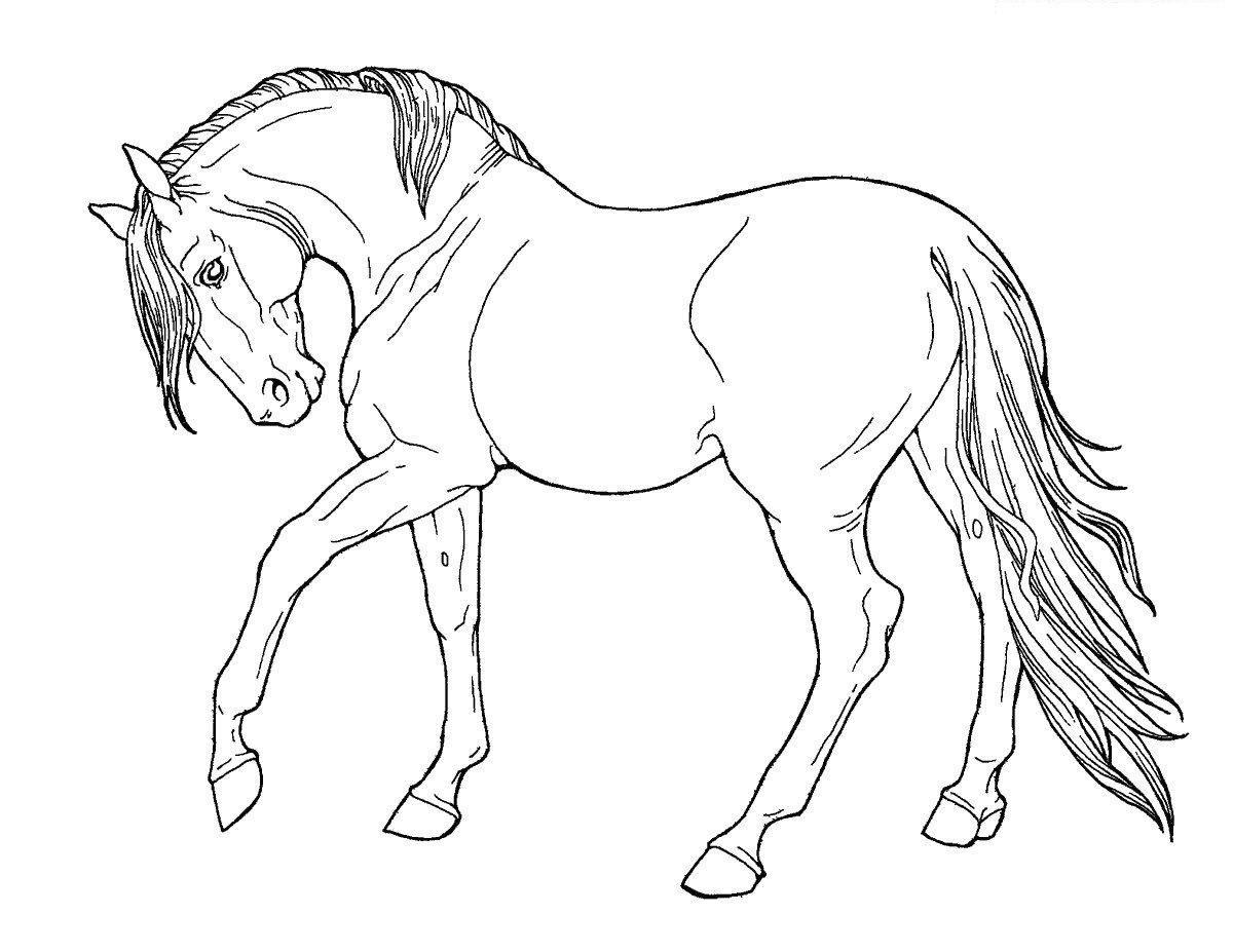 лошадки рисунки раскраски