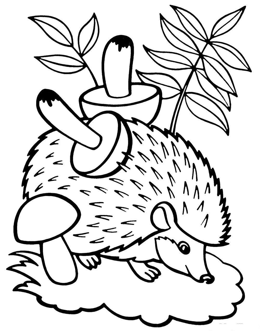 кто картинки раскраски зайчика и ежика среднеранний сорт средней