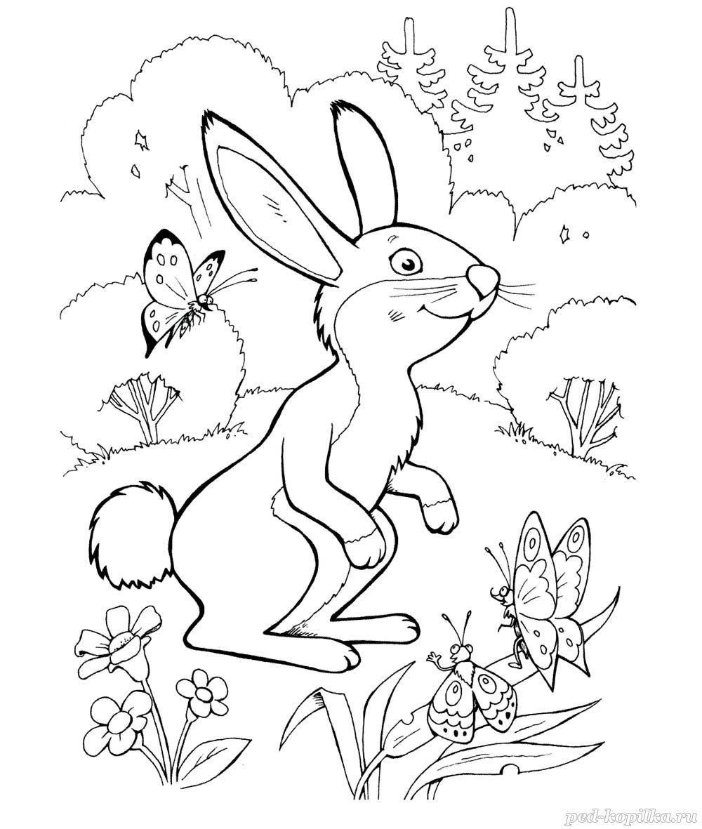 раскраска заяц в лесу