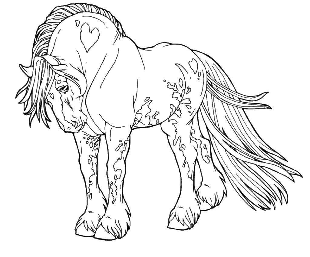 лошадки рисунки для раскрашивания