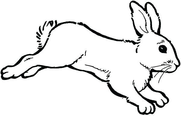 заяц раскраска для детей 3 лет
