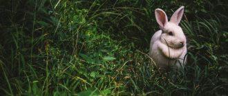 раскраска заяц распечатать