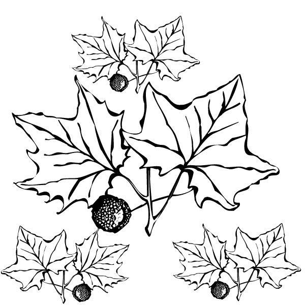 этот раскраска осенний букет из листьев распечатать остальных