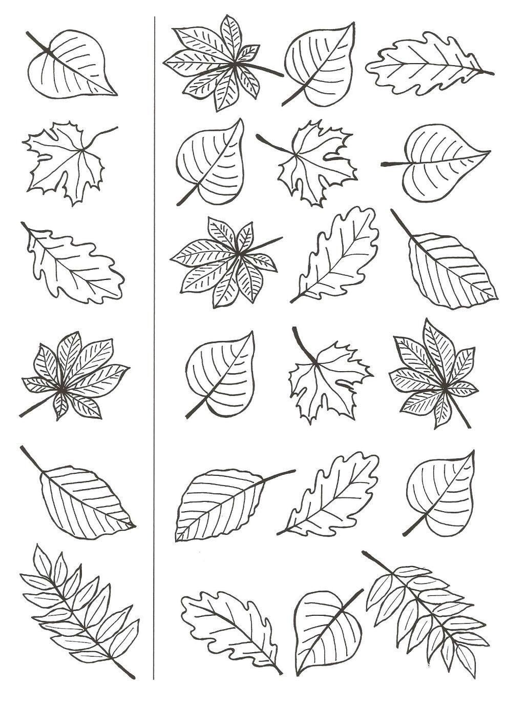 раскраска осень листья распечатать