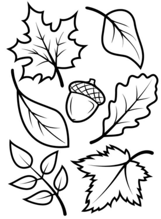 раскраски осенних листьев для детей распечатать