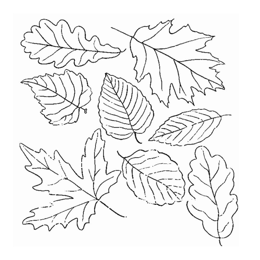 Картинка осень листья раскраска
