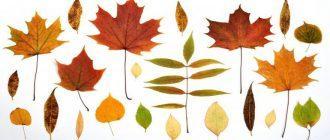 шаблоны и трафареты листья для вырезания из бумаги
