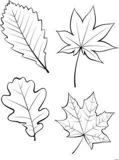 шаблоны листьев трафарет распечатать