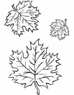 шаблоны кленовых листьев распечатать