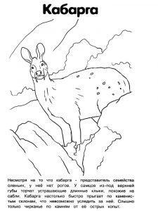 раскраска животные красной книги распечатать
